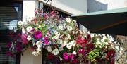 Meneglaze Guest House - hanging basket flowers