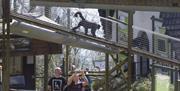 A monkey at the Monkey Sanctuary