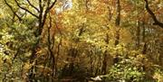 Kilminorth Woods in autumn