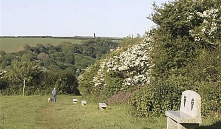 The Wooldown in spring