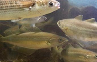 Fish at Fowey Aquarium