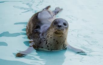 Cornish Seal Sanctuary