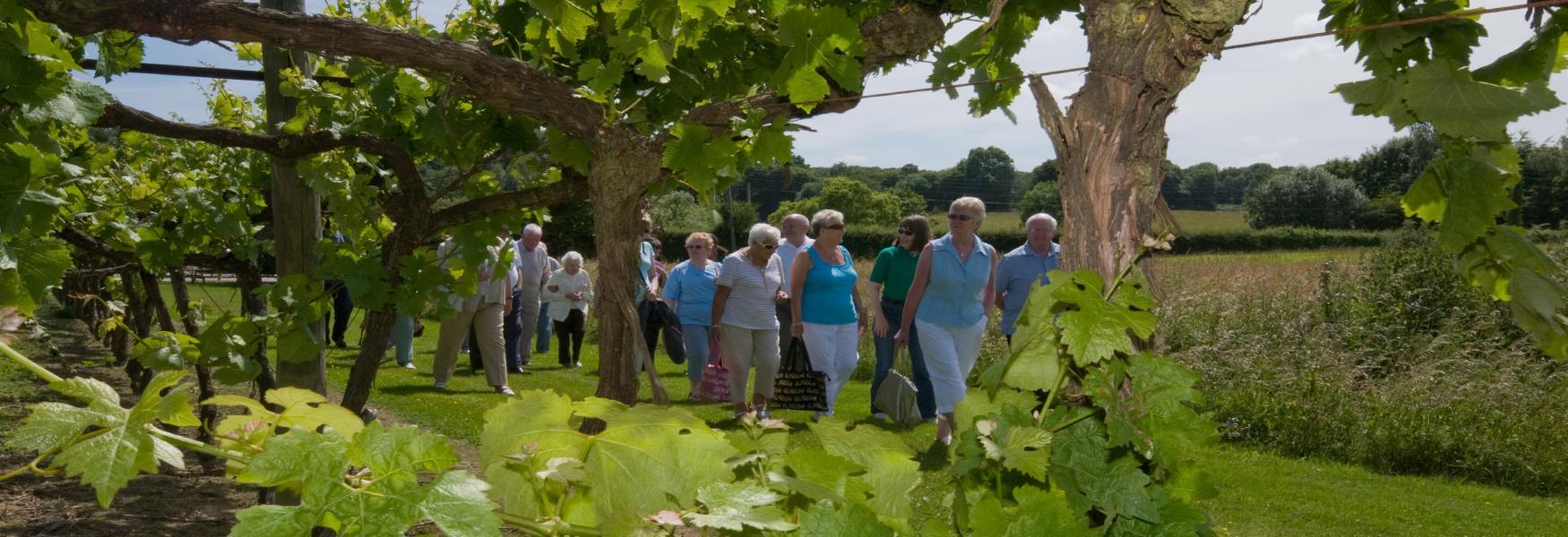 Guided tour of Biddenden Vineyard
