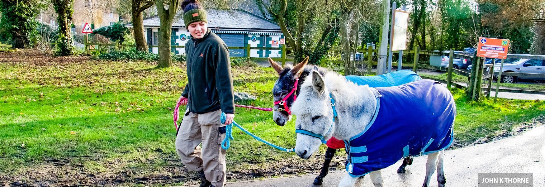 Kent Life Donkeys