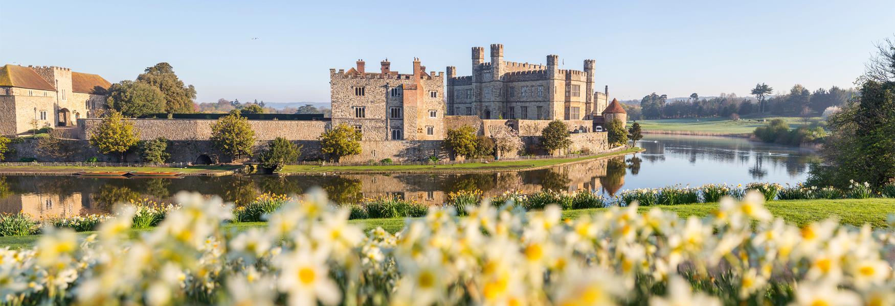 Leeds Castle Daffodils