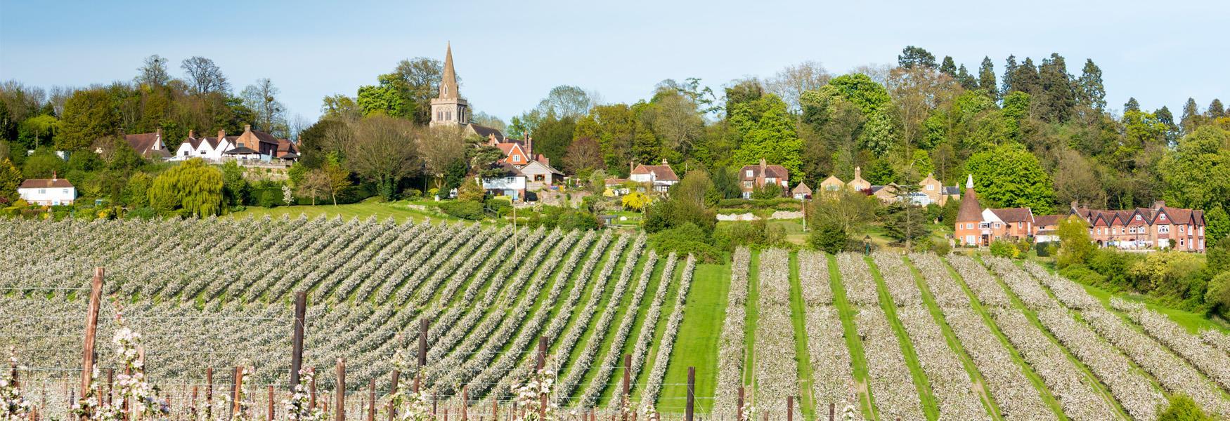 Kent Orchards near Linton