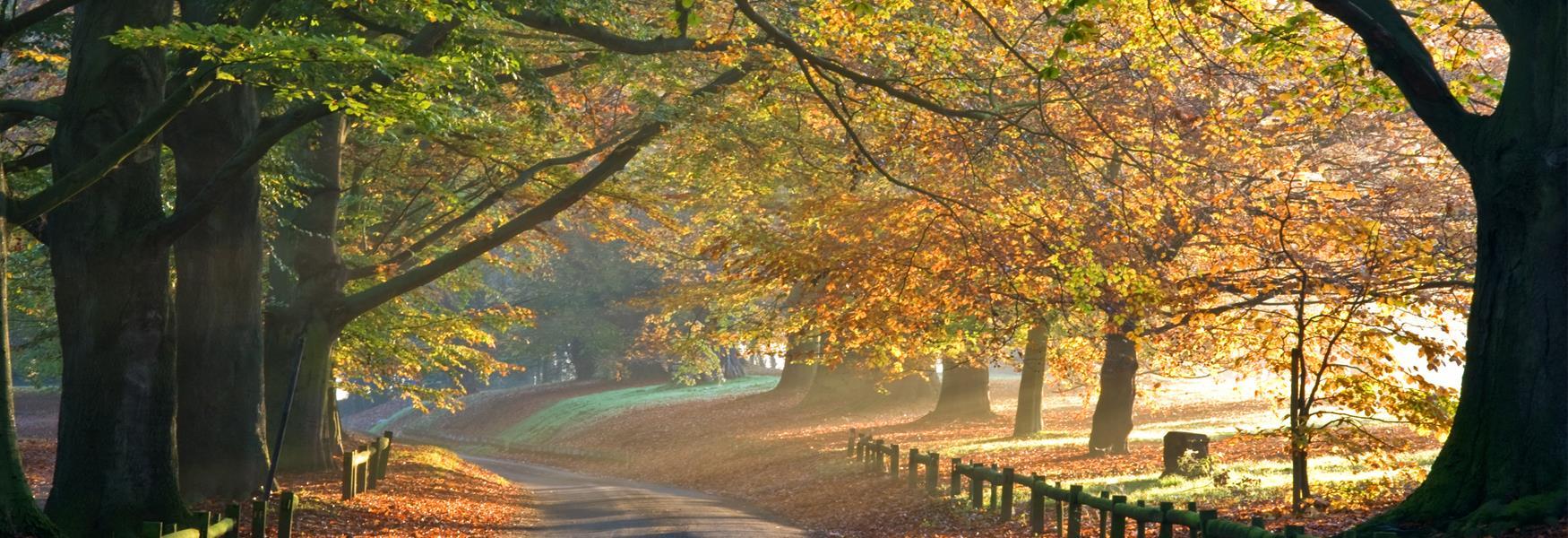 Mote Park in Autumn
