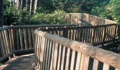 Whatman Park Treetop Walk
