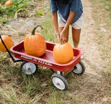 Pumpkin Picking in Manchester