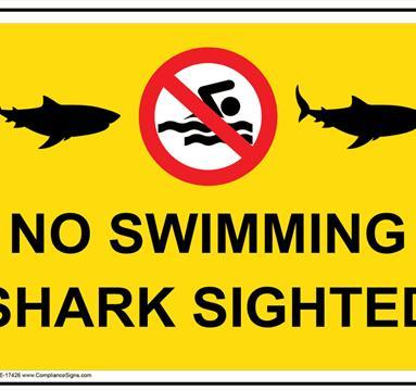 Yellow poster: No swimming. shark sighted