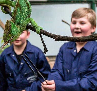 Children amazed by a chameleon at Chester Zoo