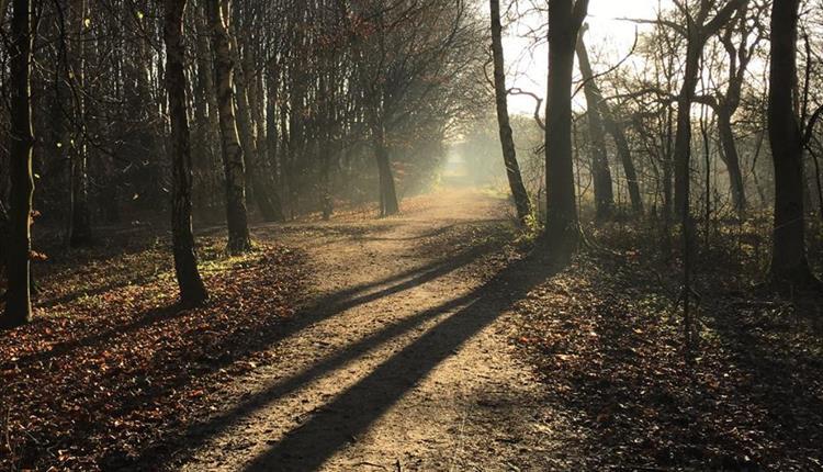 Chorlton Ees Nature Reserve