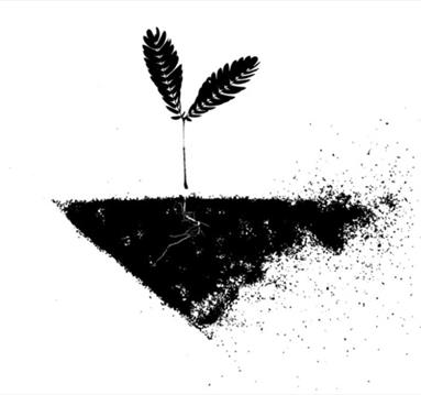 Black and white image: growing seed