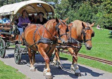 People sitting in a horse-drawn carriage