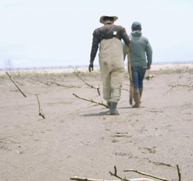 Seaside: people walk on a sand
