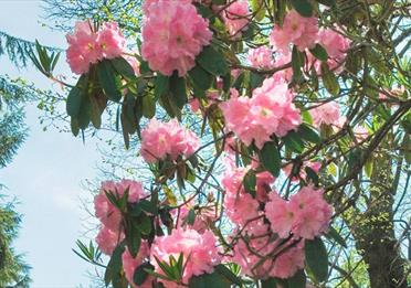 Victoria Park Blossem