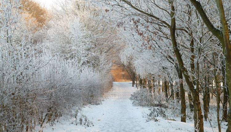 Chesham woods in the snow