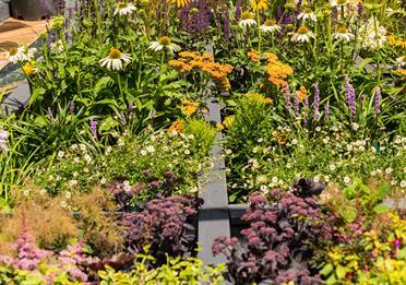 How does your Art Garden GROW?