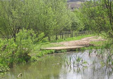 Pond dipping platform at Leesbrook