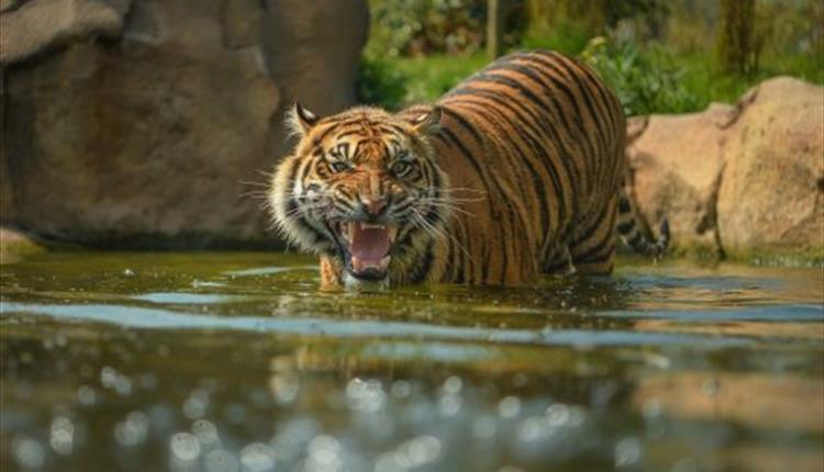Chester Zoo Day trip