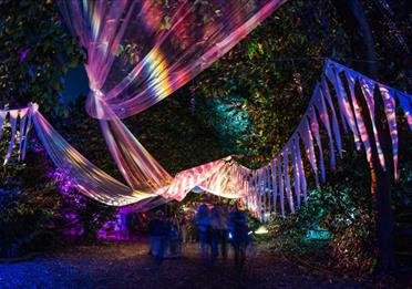 Magical Woodland Lost Woods light installation