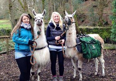 Nidderdale Llama Trekking