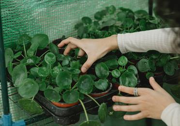 Woman working with potted plants in hothouse