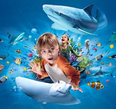 Things to see at Sea Life Manchester Aquarium