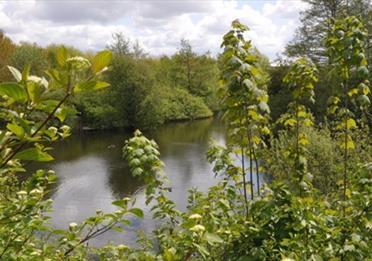 Trafford Ecology Park