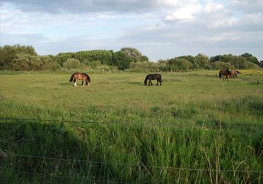 Horses grazing in Urmston Meadows