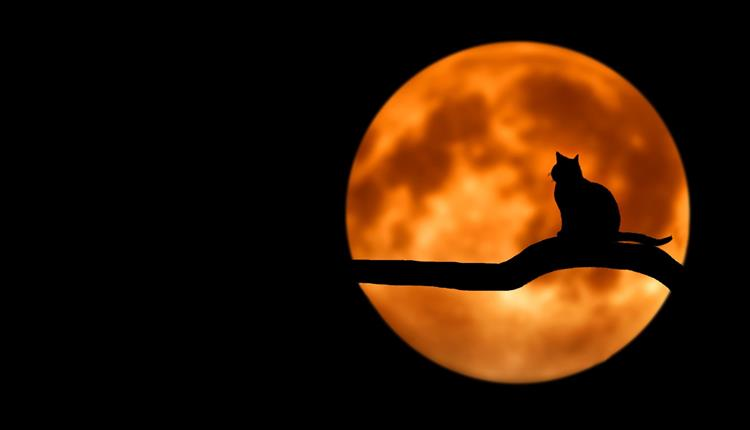 Cat with a backdrop of a full moon