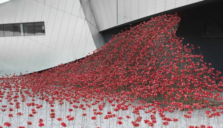 Poppies display at the Imperial War Museum North