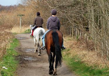 Horse Riding TPT