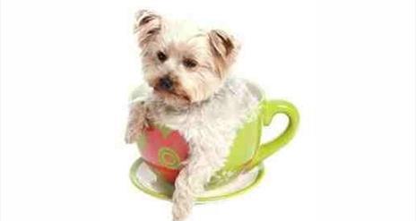 Paws 4 Tea