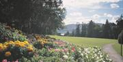 A view of the wild flowers in Kilbroney Park, Rostrevor