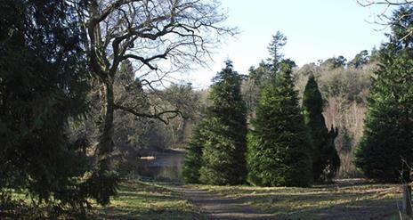 Castlewellan Forest Park, Cypress Pond Trail