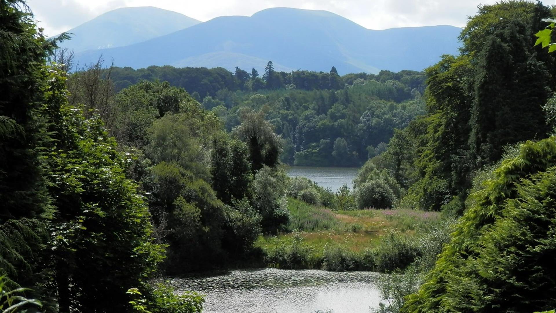 Castlewellan Forest Park - Cypress Pond Walk