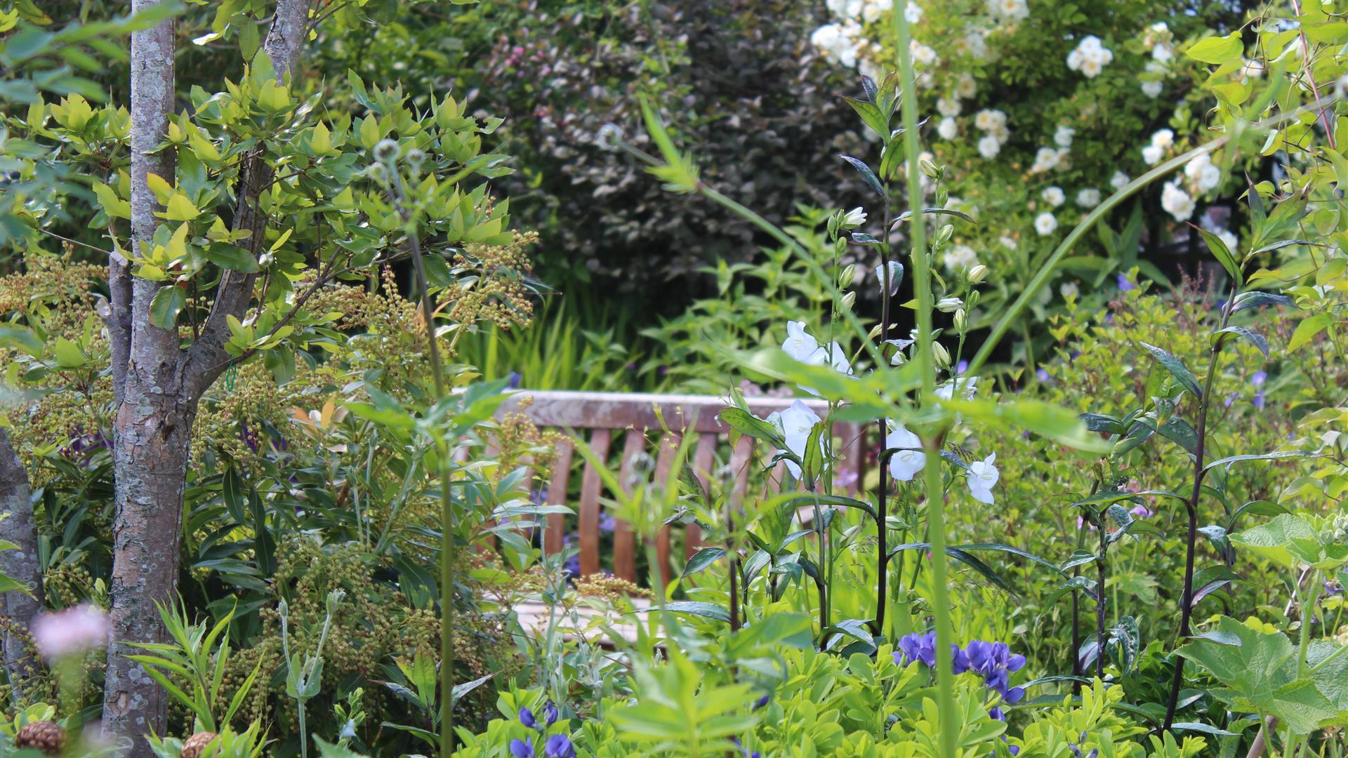 7 Mount Charles North Garden