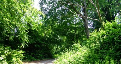 Delamont Mullagh Walk