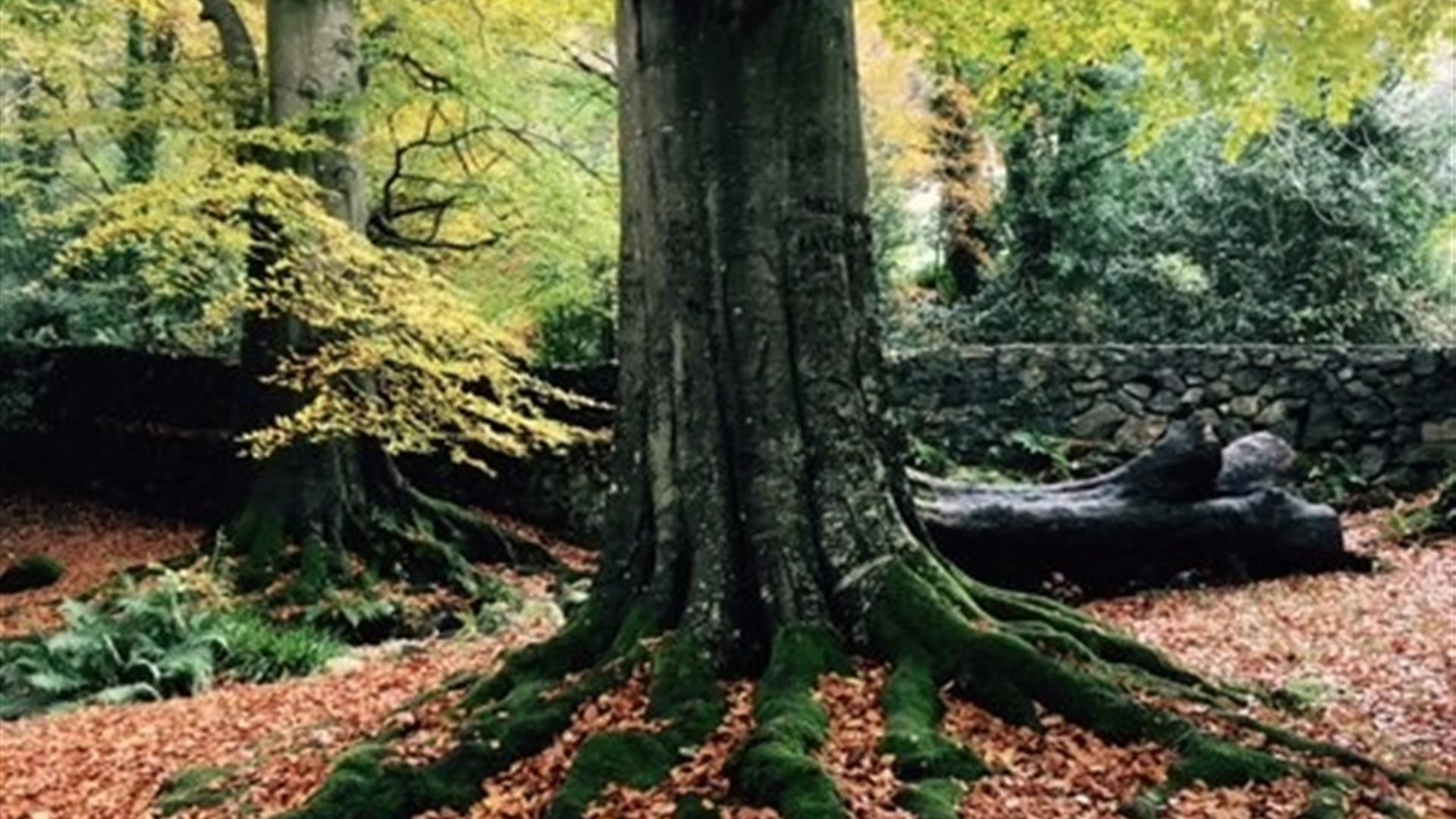 Kilbroney Tree Trail
