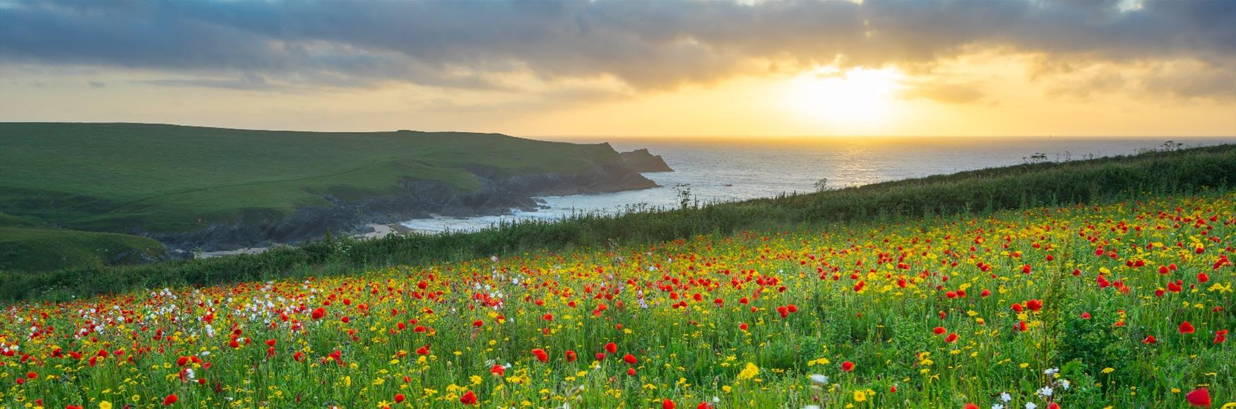 Poppy Fields at West Pentire