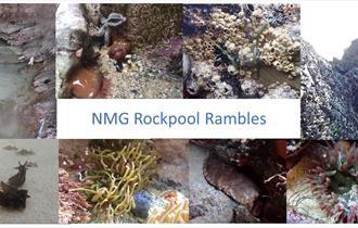 Half Term Rockpool Ramble at Towan Beach
