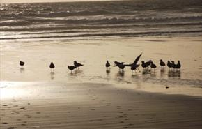 Newquay Early Bird Booking Discounts for 2022