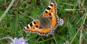 Image is a close-up of a colourful butterfly in a field