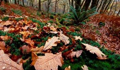 Rostrevor Forest
