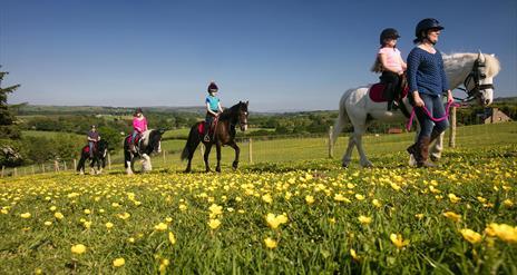 City of Derry Equestrian Centre