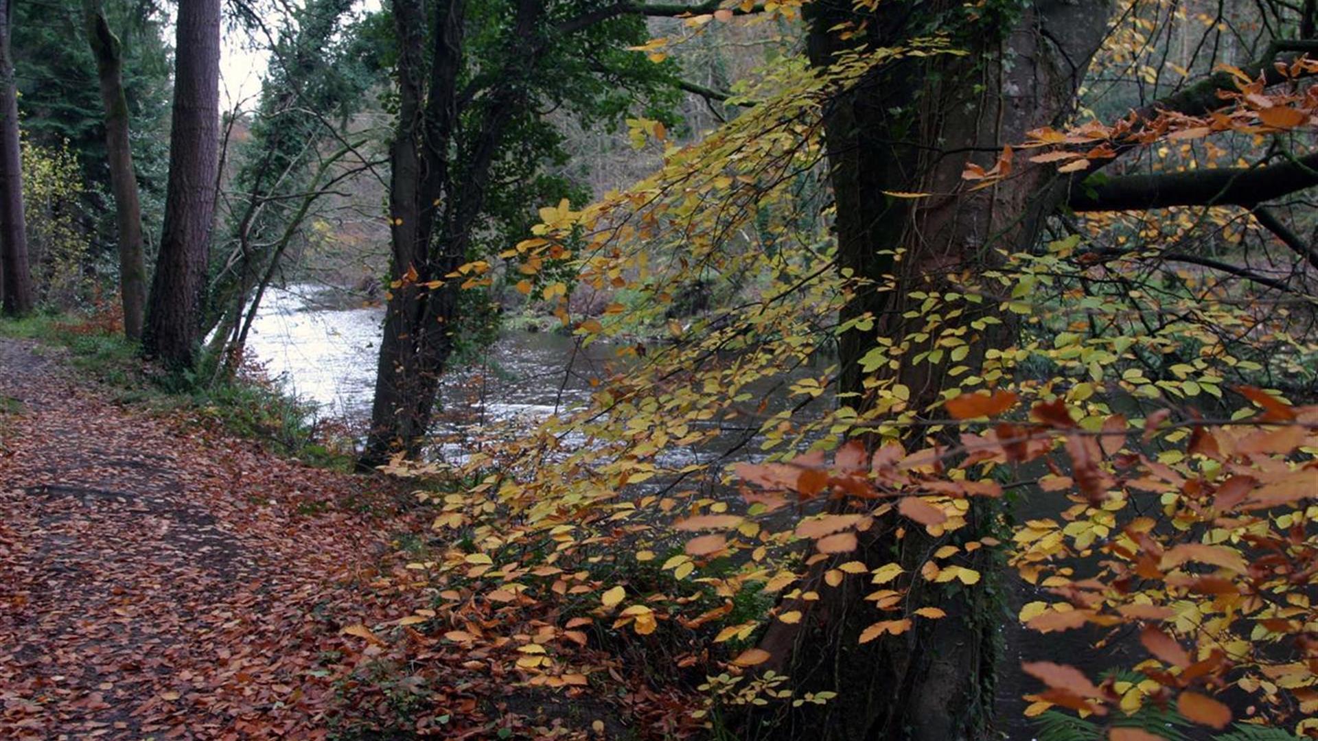 Gortnamoyagh Forest