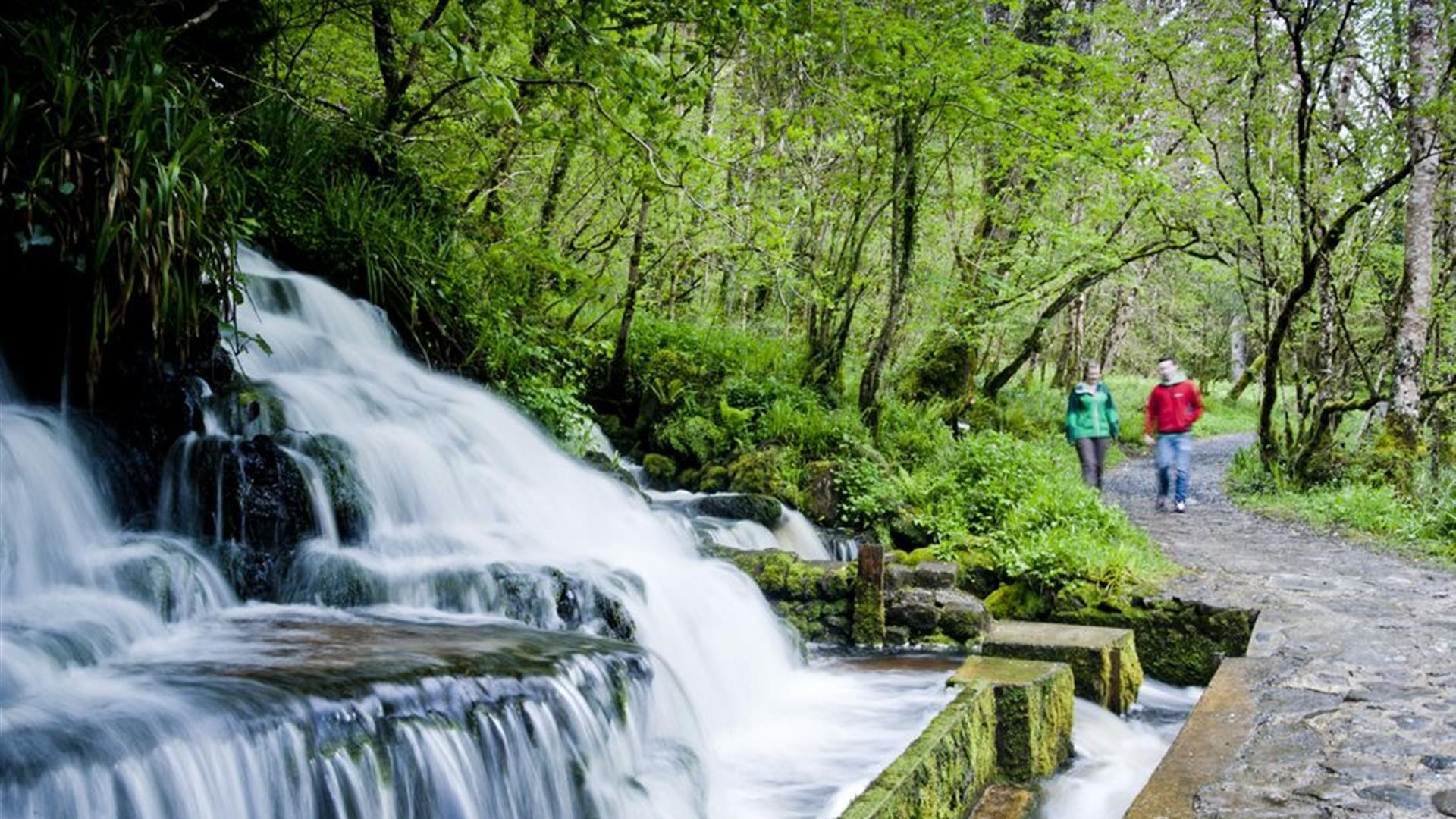 Cladagh Glen -  Marlbank National Nature Reserve