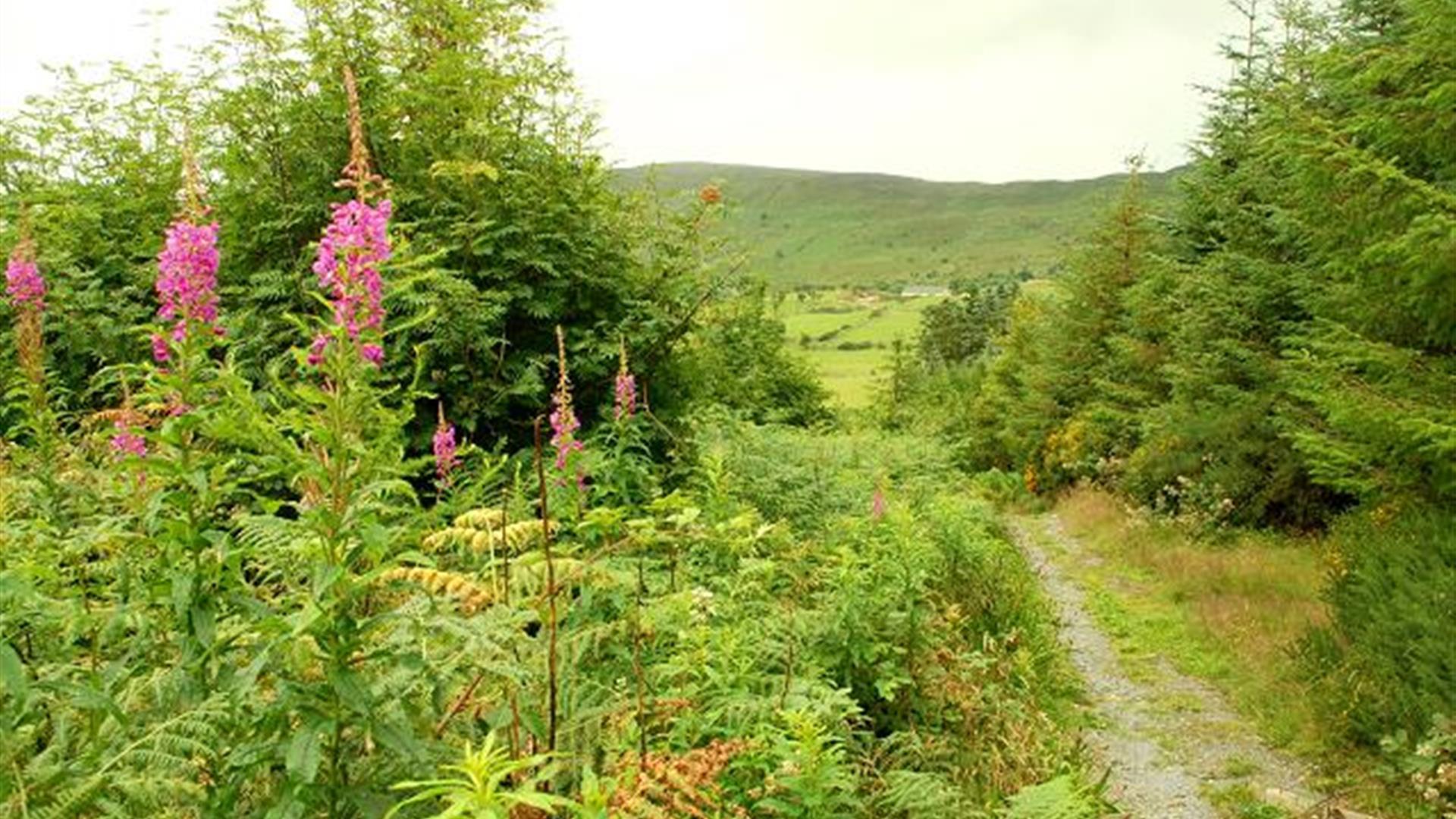 Drumkeeragh Forest Park
