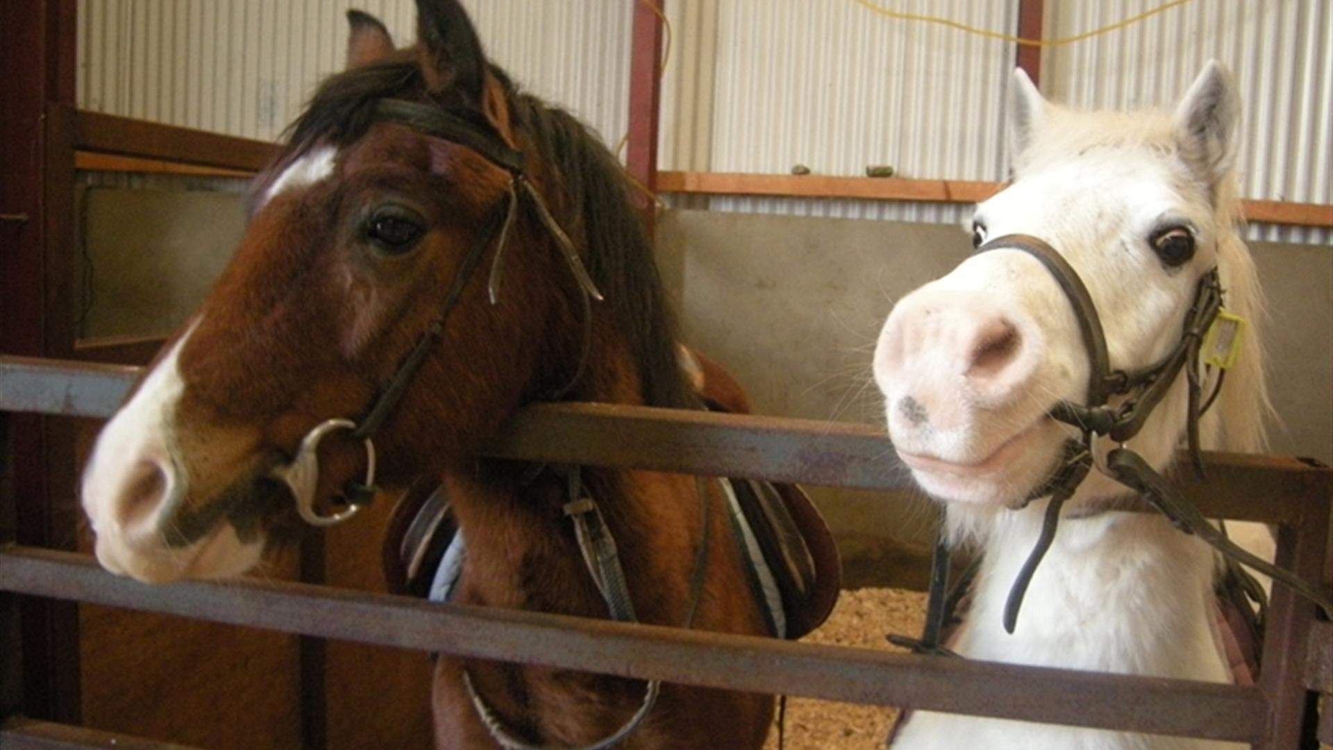 Faughanvale Stables - Riding School, Pony Club and Trekking Centre